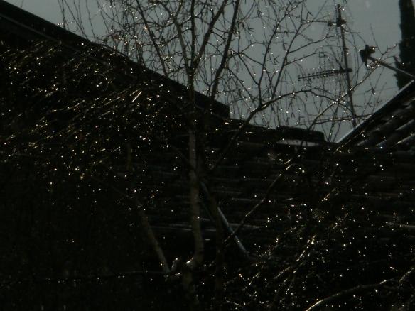 Rain Lights