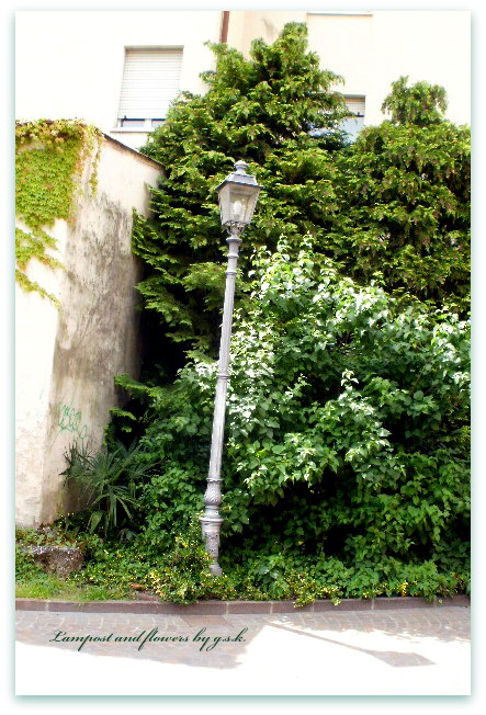 lampost and flowers
