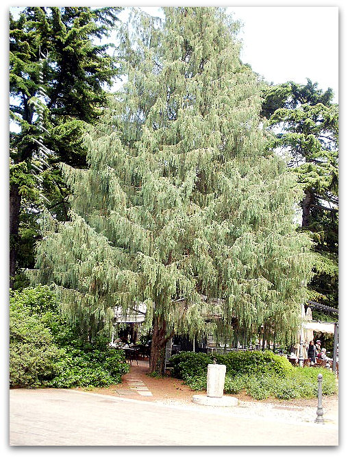 tree in the park_2