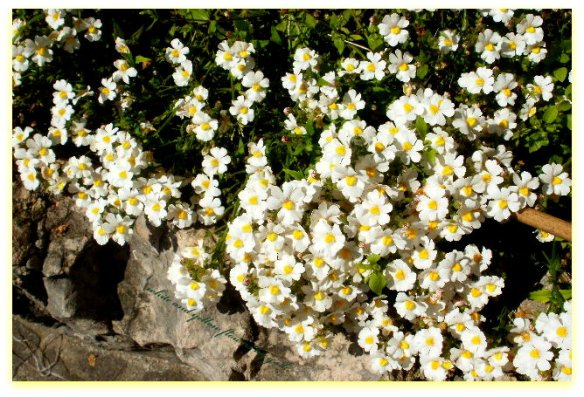 white and yellow flowers