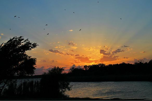 Swallow's Sunset by Jerry Stolarsky