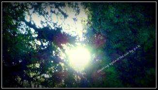 shooting against the sun