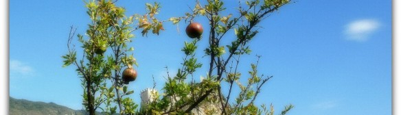 cropped-pomegranates-and-castel.jpg