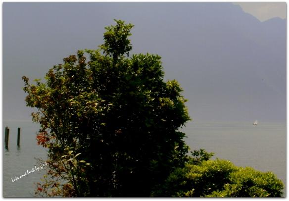 lake and bush