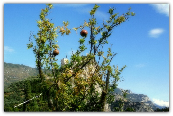 pomegrantes and castle