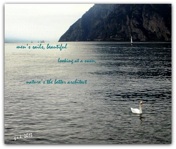Swan Haiga