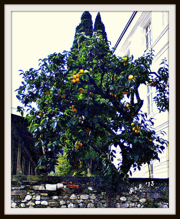 hdr persimmons