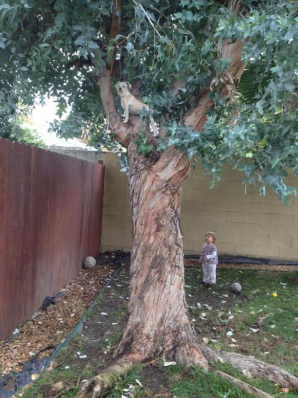 A note from Rochelle: To start off the year with a bit of whimsy, I'm posting my daughter-in-law's picture of their tree-climbing dog. She assures me that this is untouched and not photo-shopped. Yep, that's my granddaughter watching.