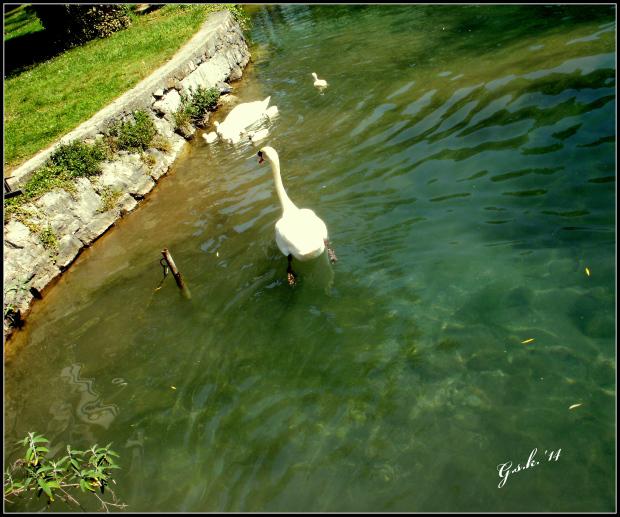 http://bastetandsekhmet.files.wordpress.com/2014/05/swans.jpg
