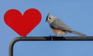bird-heart-300x182