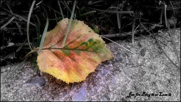 7-2-2014-dying-leaf