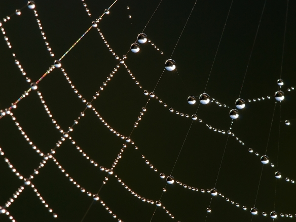 Dew on a spider's web in the morning. Luc Viatour