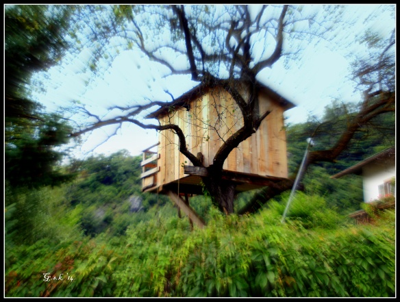 zoomed tree house