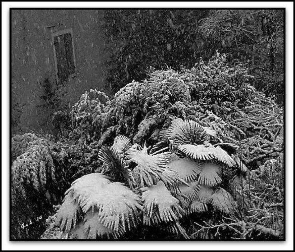 Snow Robes