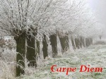 114ff-winterlandscape2bnew2bcarpe2bdiem2blogo