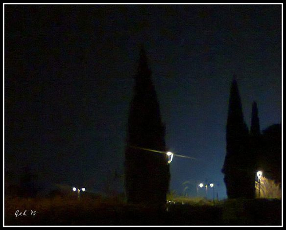 night trees_small
