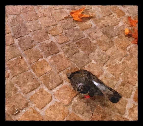 Signed_pigeon_FotoSketcher