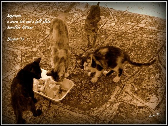 haiga_kitty party_small