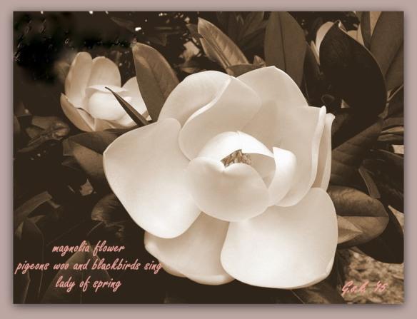 Magnolia-flower_2_haiga_14