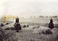 1939 Two women working in the fields in tracht