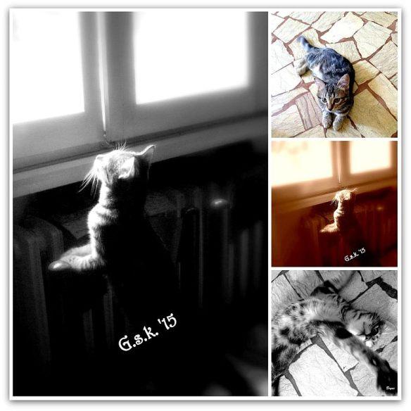 Brynn collage_small