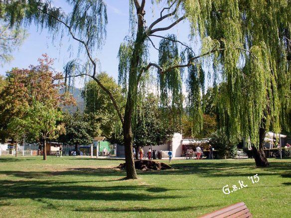 fallen willow_2