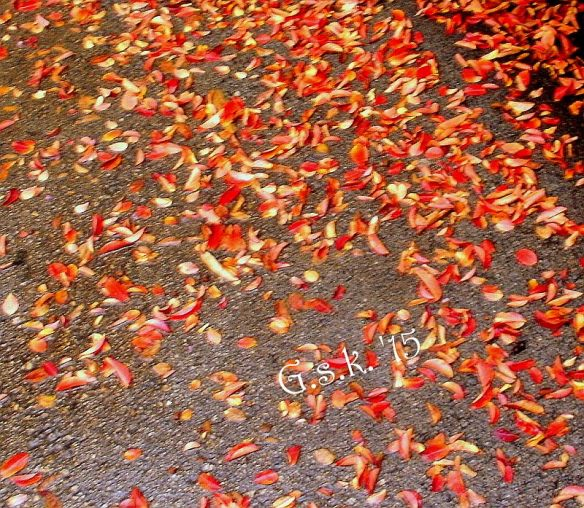 Red Fallen Leaves