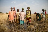 rice-field-women