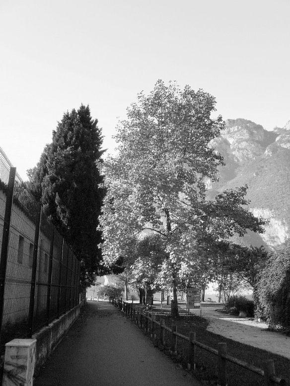 autumn tree perspective _bw