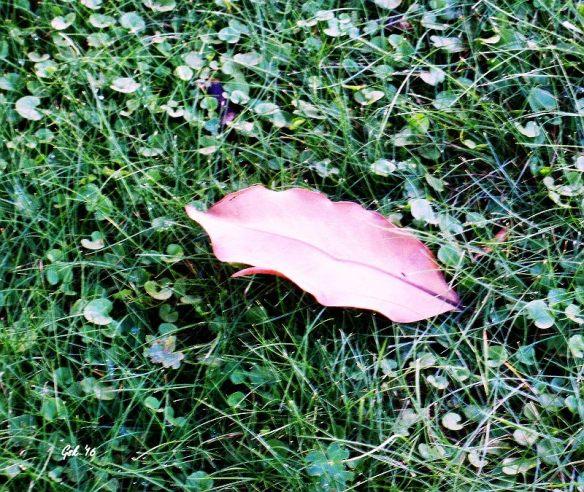 leaf in wet grass